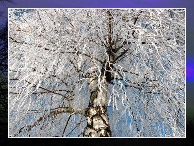 Winterbilder viii